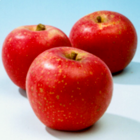 Appelboom Sterappel