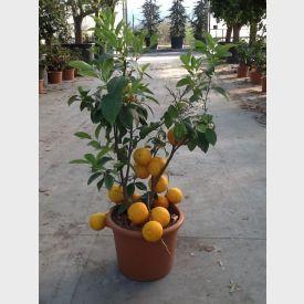 Citroen Meyer plant