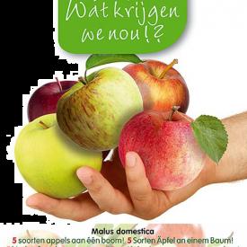 Vijf soorten appel aan 1 boom
