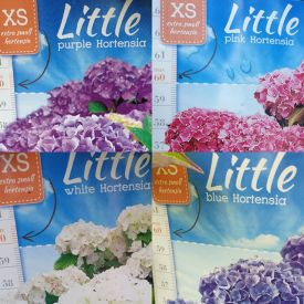 Hortensia Little XS