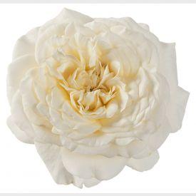 Eetbare Roos Creamy bloem